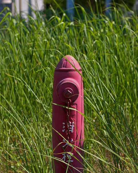 Fire hydrant taken over by very tall grass...