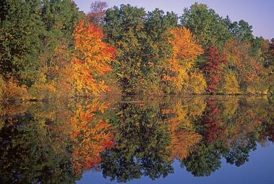 Autumn foliage near Boston.