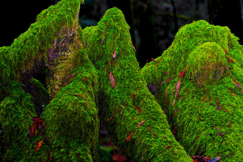 Moss On Logs