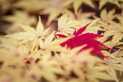 Gibbs Fall Colors