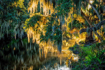 USA, Florida, Cockroach Bay Aquatic Preserve, Spanish moss's golden glow from the setting sun.