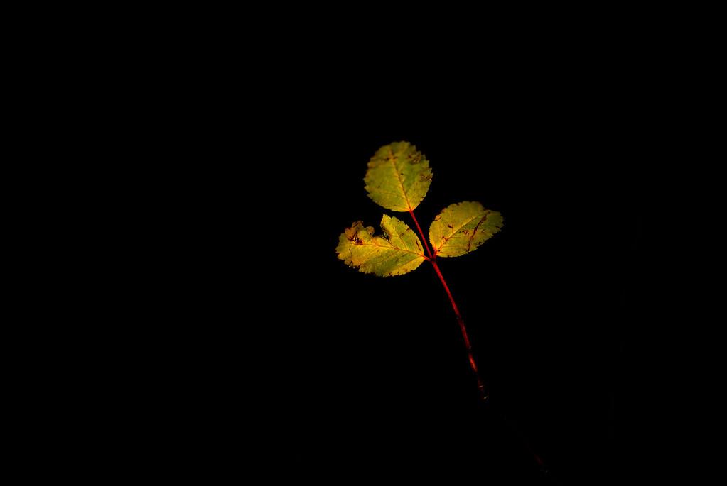 Leaves on a Stem
