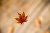 Leaf in Free Fall