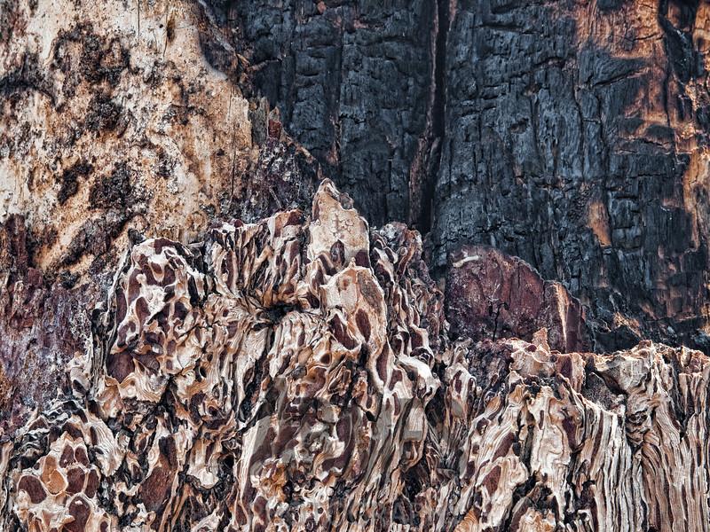 Burnt tree detail, Vista Encantada, North Rim, Grand Canyon National Park, Arizona