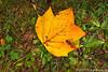 Tulip Fall