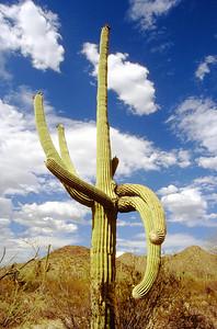 Near Tucson, Arizona.