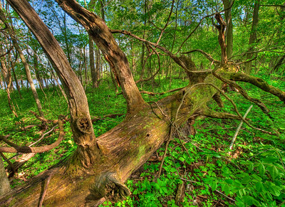 USA, Indiana. The woods in spring at the Celery Bog