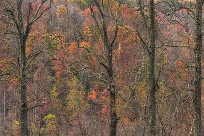 USA, Ohio.  Colorful trees in autumn.