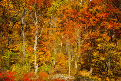 USA, Indiana. Trees and foliage at Cataract Falls State Recreation Area in autumn.
