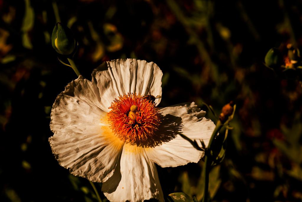 Flower & Honey Bees