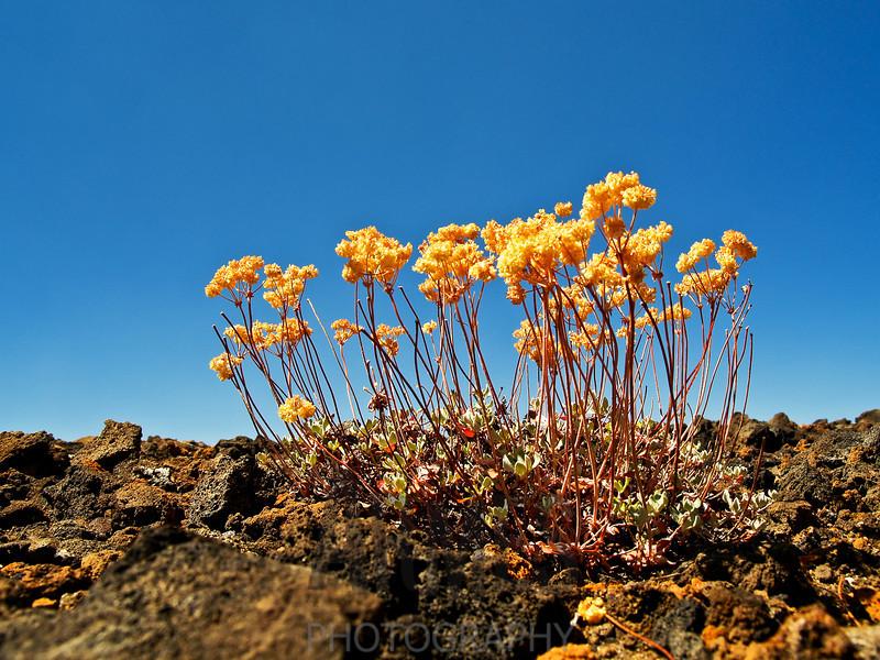 Cinder Cone, Lassen Volcanic National Park, California