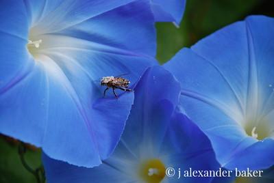 Bee Hiker