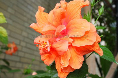 flora Nature Flower