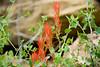 2007 Colorado Trip - Mesa Verda Wild Flower