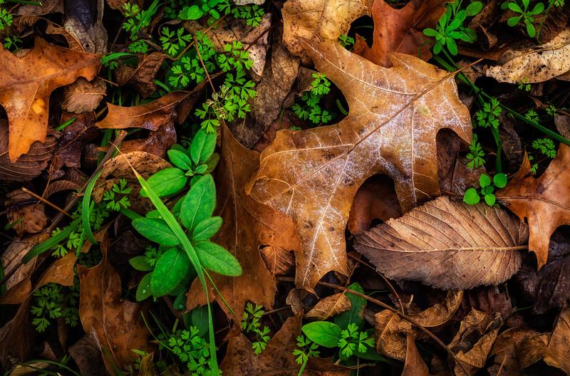 Forest Floor Contrasts