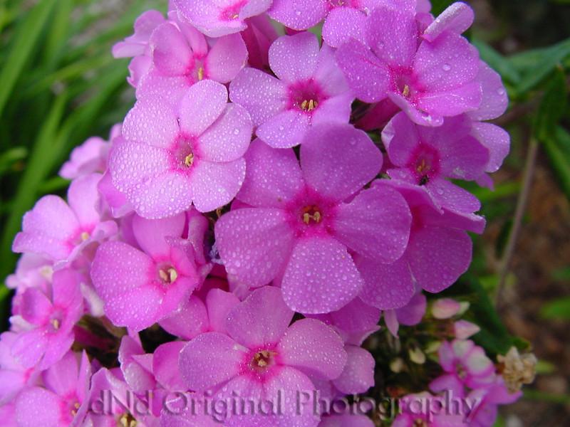Aug 05 Flower In Garden