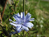 Fall 2005 - 09 Wild Flower