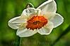138 Shaw Garden 4-20-2008 - Flower (lucas expose)