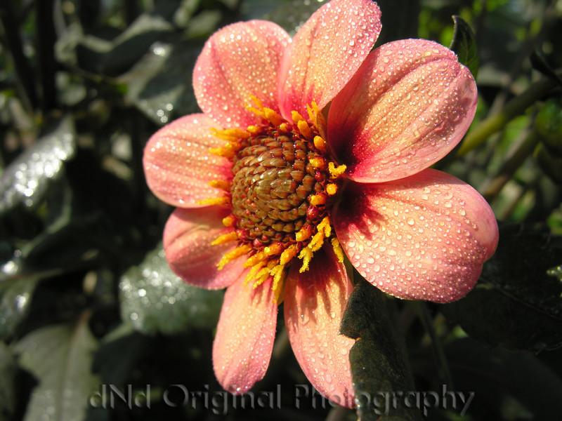 023 Garden Flower 1 2006
