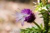 2007 Colorado Trip - Lookout Mountain Wild Flower
