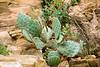 2007 Colorado Trip - Mesa Verda Cactus