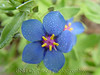 Star Flower 2002