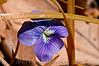 123 Shaw Garden 4-20-2008 - Flower 1 of 2 (nik indian summer)