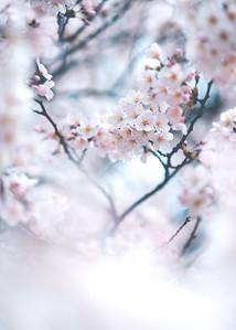 Blossoming Dreams