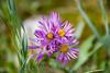 2007 Colorado Trip - Flower in Rocky Mountain Nat Park