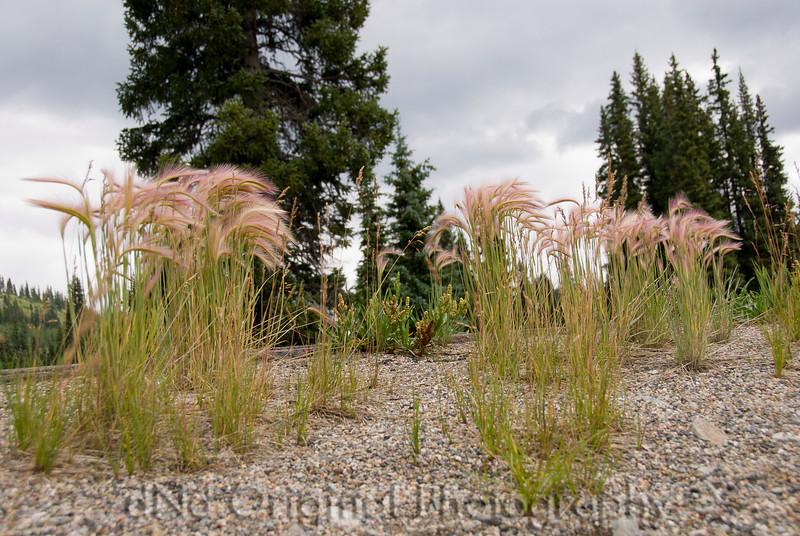 2007 Colorado Trip - Silverton Loop Wind Swept Weeds