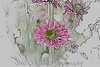114 Flower From An Arrangment March 2008 (colored pencil)