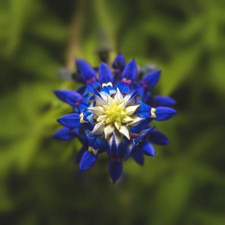 Floral & Plants
