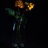 Rose, withering, petal, still life