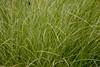 Grass, Denver Botanical Gardens