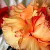 Orange-red carnation in a bouquet.