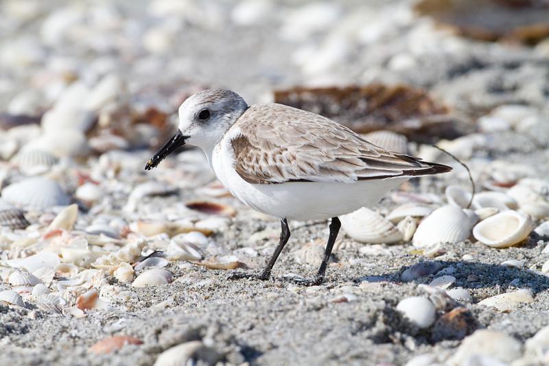 Sanderling - Captiva, FL