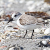 Sanderling - Captiva, FL