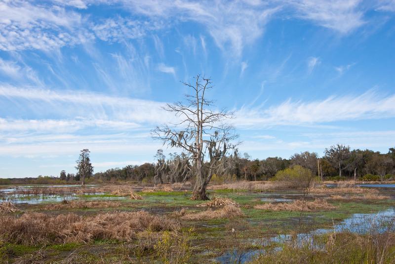 Wetland area at Circle B Bar Reserve