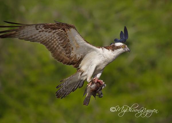 Florida Birding-2013