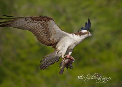 Florida Birding Trip