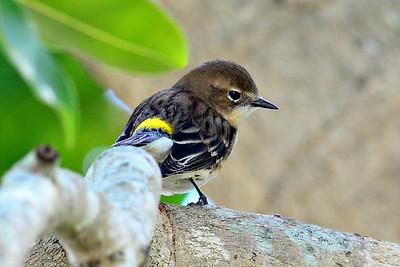 Florida Birds  2015