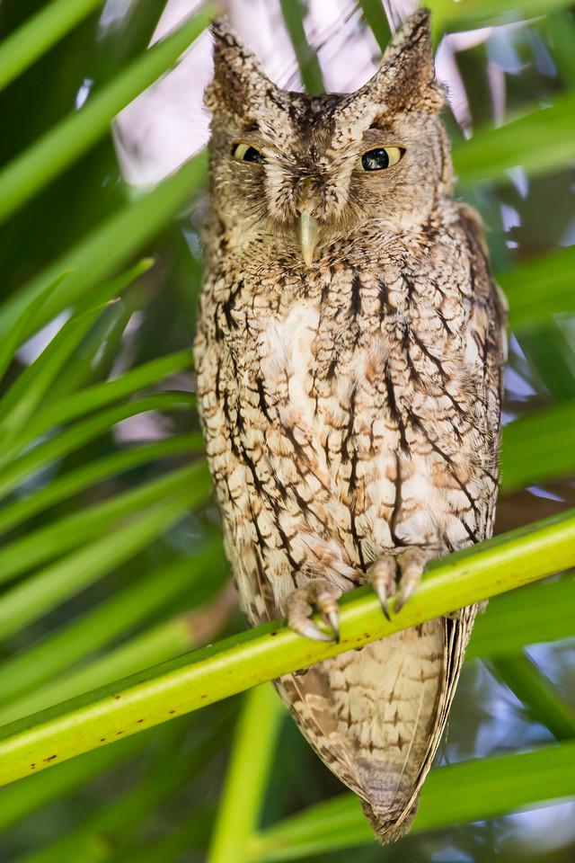 Owl-240