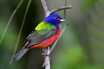 Florida Birds Spring 2014