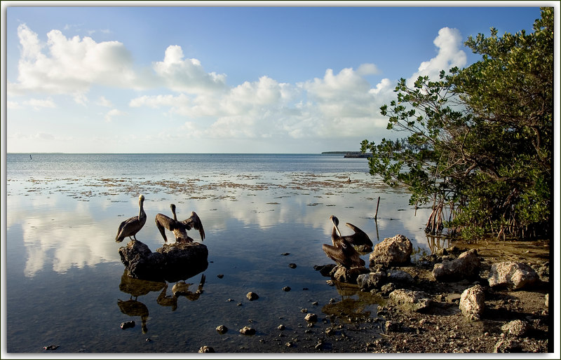 Pelican Afternoon.....serene late day scene...Key Largo, Florida