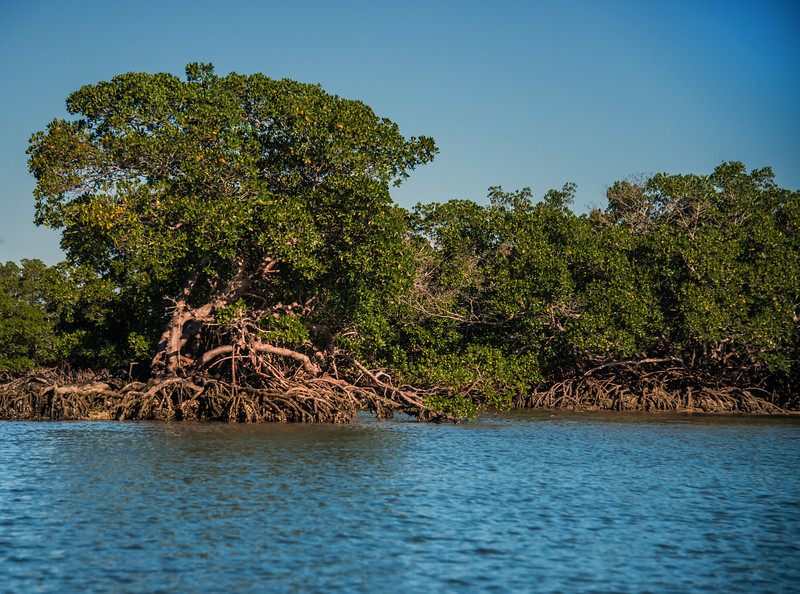 Everglades boat tour