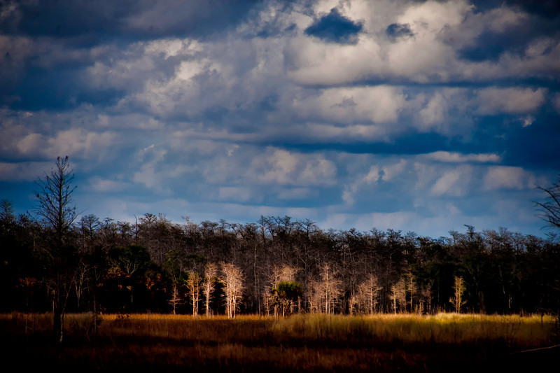 Everglades in winter
