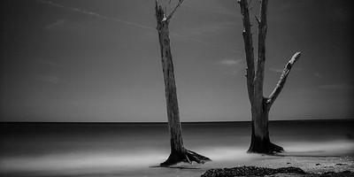 Driftwood Shoul