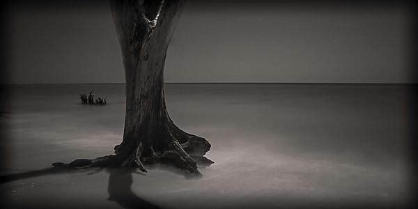 Lonley Oak