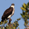 2007-osprey_Emerson Point
