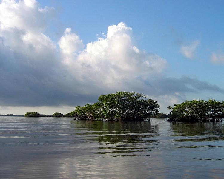 2008-Ten Thousand Islands rookery